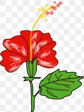 Picture Of Hibiscus Plant - Shoeblackplant Flower Hawaiian Hibiscus Drawing Clip Art PNG