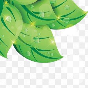 Leaf - Leaf Green Drop PNG