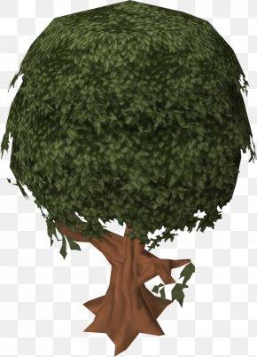 Cinnamon - Pistacia Lentiscus Sassafras Tree Cinnamon Woody Plant PNG