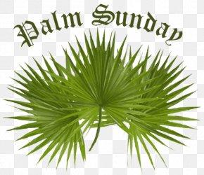 Palm Border - Palm Sunday Arecaceae Facebook Easter Clip Art PNG