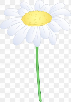 Daisy Flower Cliparts - Common Daisy Oxeye Daisy Common Sunflower Transvaal Daisy Illustration PNG