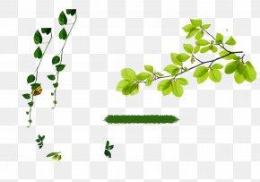 Green Background - Advertising Poster Leaf Gratis PNG