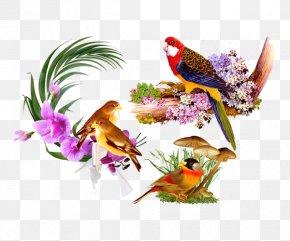 Variety Parrot Floral Still Life Decorative Background Pattern - Bird Still Life PNG