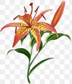 Lilium Flower Clip Art Image - Image File Formats Lossless Compression PNG