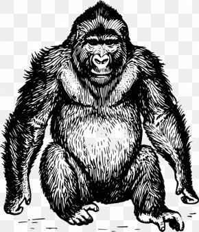 Chimpanzee - Ape Gorilla Orangutan Clip Art PNG