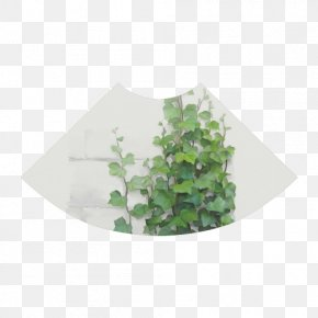 Watercolor Plant - Vine Watercolor Painting Ivy Plant Art PNG