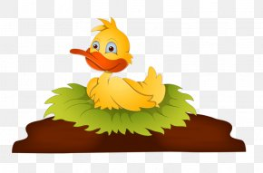 Duck - Angry Birds Cartoon Illustration PNG