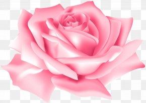 Pink Rose Flower Clip Art Image - Rose Flower Pink PNG