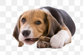 Dog Gnawing On A Bone - Puppy Cat Chewing Chew Toy Dog Toy PNG