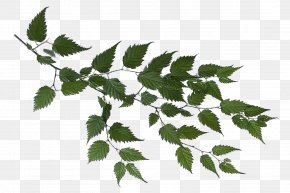 Branch - Branch Leaf Tree Clip Art PNG