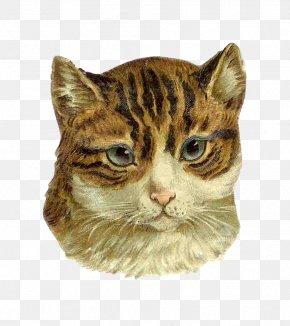 Cute Cat - Kitten Norwegian Forest Cat Persian Cat Tabby Cat Clip Art PNG