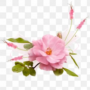 Flower - Drawing Flower Garden Roses Decoupage PNG