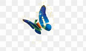 Butterfly - Information Technology PNG