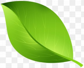 Green Leaf Transparent Clip Art Image - Cartoon PNG