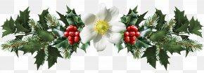 Mistletoe - Common Holly Mistletoe Christmas Clip Art PNG