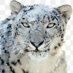 Leopard - Mac OS X Snow Leopard Mac OS X Leopard PNG