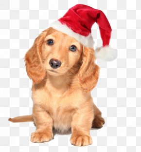 Christmas Animals - Dachshund Australian Cattle Dog Yorkshire Terrier Puppy Pet PNG