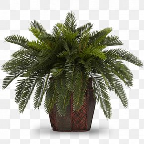 Plant - Flowerpot Houseplant Areca Palm Albizia Julibrissin PNG