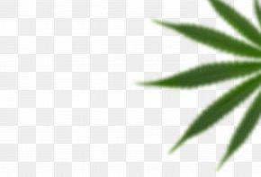 Leaf - Leaf Hemp Plant Stem Tree PNG