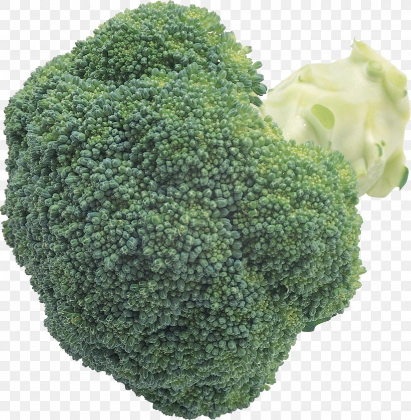 Broccoli Slaw Cauliflower Cabbage, PNG, 1354x1384px, Broccoli, Brassica Oleracea, Broccoli Slaw, Brussels Sprout, Cabbage Download Free