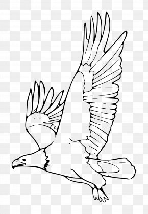 White Eagle Cliparts - Bald Eagle Black And White Black-and-white Hawk-eagle Clip Art PNG