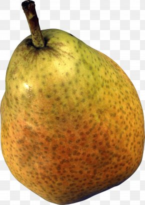 Pear Image - European Pear Papa Pear Saga Princeton University Fruit PNG