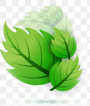 Green Leaf Design Vector - Leaf Euclidean Vector Adobe Illustrator PNG