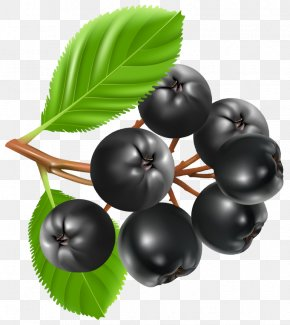 Blueberries - Blueberry Pie Bilberry Clip Art PNG