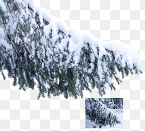 Snow Tree - Tree Snow Branch Pine Winter PNG