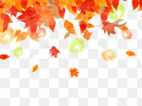 Background Fall Maple Leaf PNG