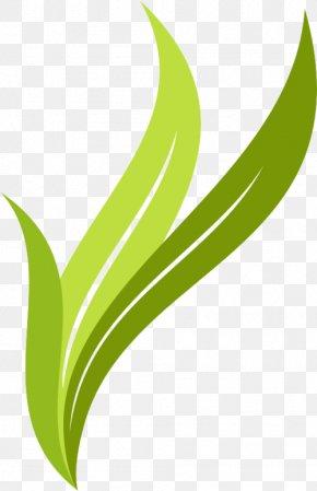 Creative Leaves - Leaf Logo Brand PNG