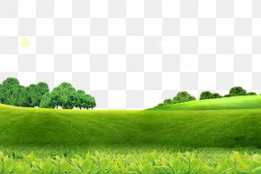 Spring Background - Poster Screensaver High-definition Television PNG