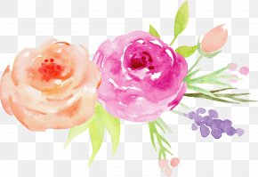 Hand-painted Watercolor Roses Decorative Elements - Flower Watercolor Painting Garden Roses PNG
