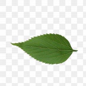 Leaf - Leaf Avatar Icon PNG