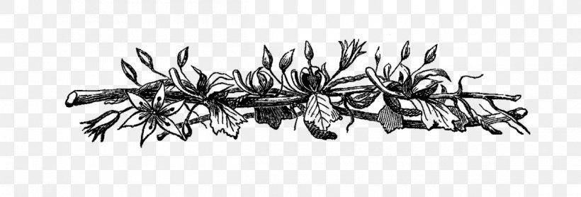 Flower Borders Black White Images, Stock Photos & Vectors | Shutterstock
