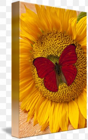 Red Butterfly - Butterfly Common Sunflower Insect Yellow PNG
