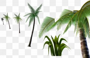 Coconut Tree Material 3D Pull-free - Coconut Tree PNG