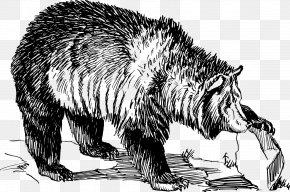 Bear - American Black Bear Animal Track Tiger Grizzly Bear PNG