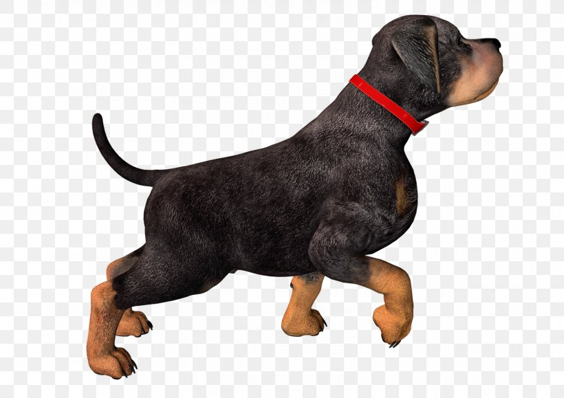 Rottweiler Puppy Clip Art, PNG, 1600x1131px, Rottweiler, Animal, Carnivoran, Dog, Dog Breed Download Free