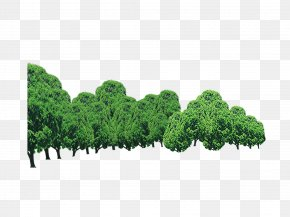 Forest - Tree Forest PNG