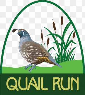 Quail - Richland Center Quail Run Golf Links Golf Course County Highway Y PNG