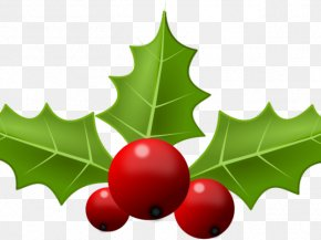 Holidays Frame Holly - Clip Art Free Content Vector Graphics Common Holly PNG