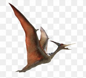 Flying Pterosaurs - Pteranodon Pterodactyls Flight Pterosaurs 3D Computer Graphics PNG