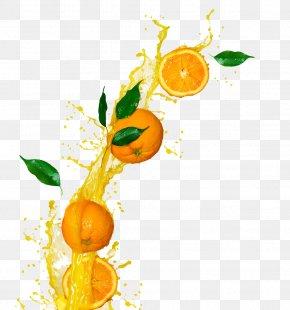 Orange Pictures - Orange Juice Juicer Fruit PNG