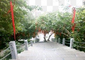 Wishing Tree Next To The Stairs - Lam Tsuen Wishing Trees PNG