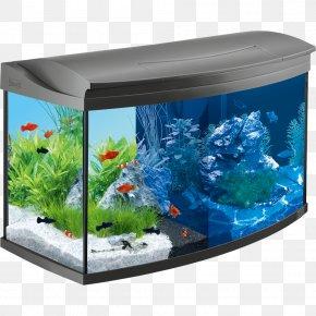 Aqua Design Amano png images   PNGWing