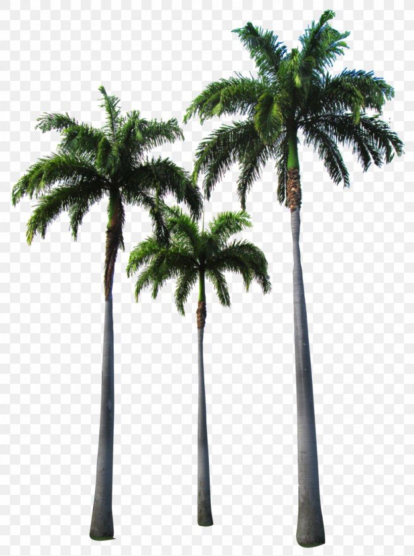 Arecaceae Tree Clip Art, PNG, 1024x1376px, Arecaceae, Arecales, Attalea Speciosa, Borassus Flabellifer, Coconut Download Free