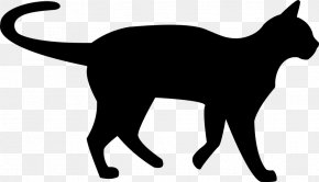 Kitten - Kitten Persian Cat Black Cat Clip Art PNG