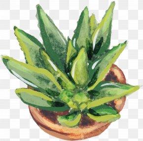 Growing Strong Aloe Vera - Aloe Vera Euclidean Vector Vecteur Cactaceae PNG