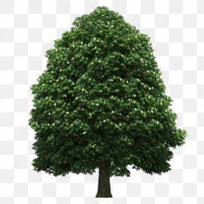 Tree - 3D Computer Graphics Copying Transparency And Translucency PNG